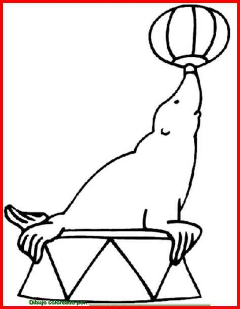 imagenes para colorear foca dibujo de foca para colorear e imprimir