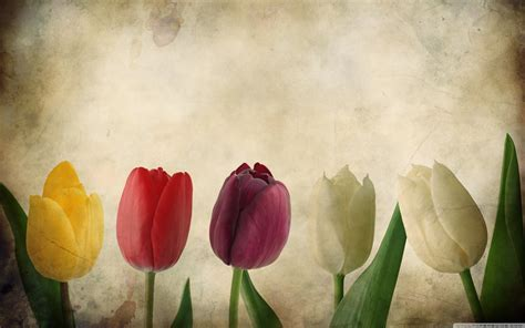 Tulips Vintage Wallpapers HD #3362 Wallpaper   WallDiskPaper