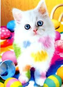 colorful cats free colorful cat phone wallpaper by uzueta