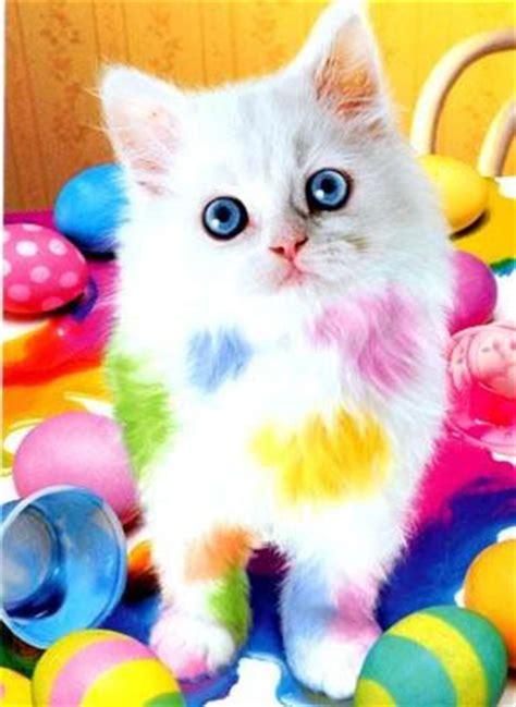 colorful cat wallpaper free colorful cat phone wallpaper by uzueta