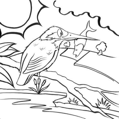 kingfisher coloring pages kingfisher colouring