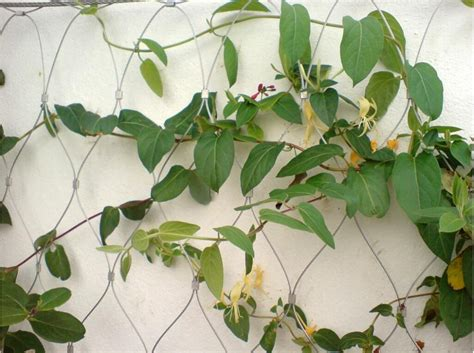 climbing plant mesh stainless steel wire rope plant climbing mesh