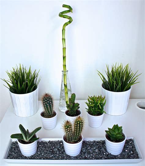 house for plants ikea low maintenance plant greenery haul danielea com