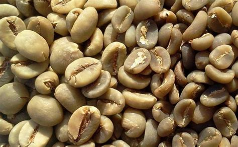 What Is The Shelf Of Coffee Beans by Green Coffee Beans For Term Storage