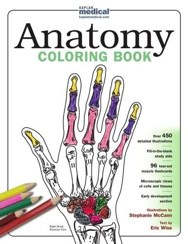 anatomy coloring book for health professions books kaplan anatomy coloring book pdf
