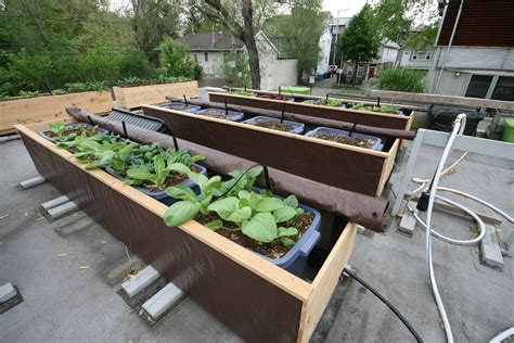 homeofficedecoration rooftop vegetable gardens