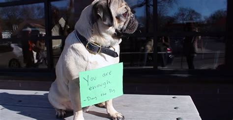 new year pug this pug s new year s resolution has everyone else s beat this s