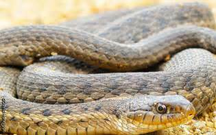 Garter Snake For Pet Outdoors Q A Can A Pet Store Rescue And Rehome A Garter