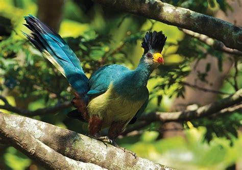 Birds Top top 10 birds that shouldn t miss on your birding list