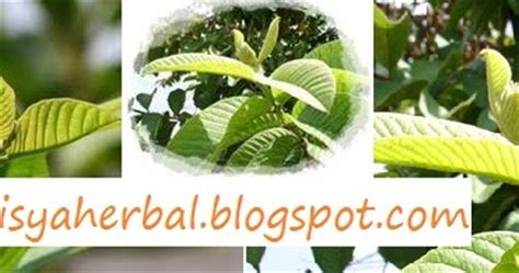 cara membuat oralit untuk mengobati diare aisyah herbal cara alami mengobati diare manfaat sari