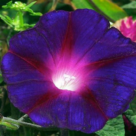violet purple image gallery purple violet