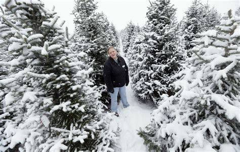 growers grateful for higher christmas tree prices daily
