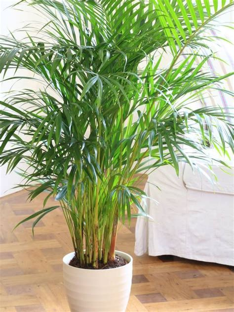 plants that need low light 25 best ideas about low light houseplants on pinterest