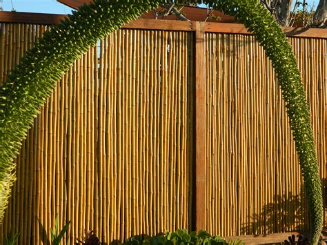 How Much Cost Fence Backyard Bamboo Grove Photo Bamboo Fencing