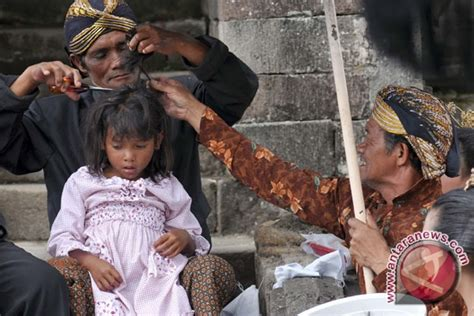 Rambut Gimbal Per Batang ruwatan rambut gimbal dijadikan ajang promosi wisata