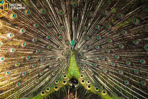nat geo photo contest 2016 winners more stunning entries from the 2016 national geographic nature photographer of the year contest