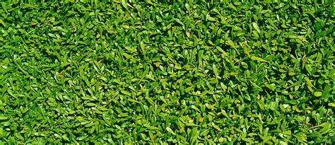 grass background pattern free picture 187 tidy grass pattern