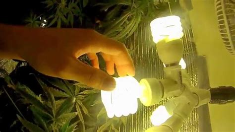 best fluorescent grow lights for weed fluorescent lights trendy fluorescent lights for growing
