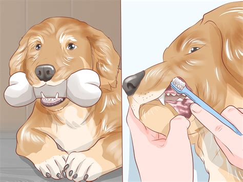 dog house grooming how to groom your dog at home between professional groomings