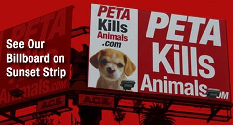 According To Peta All Animal Skin Is The Same by 17 Best Images About Animal Rights On Shelters