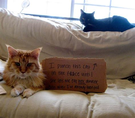 best of cat cat shaming damn cool pictures
