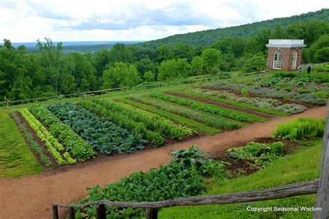 Vegetable Garden Wallpaper Wallpapers Gallery Vegetable Garden Wallpaper
