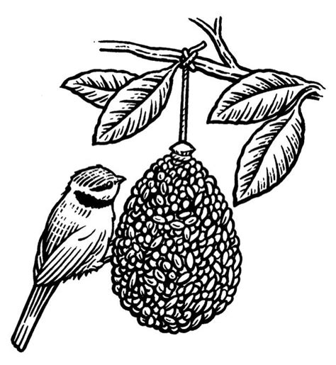 coloring pages of bird feeders how to make a pine cone birdfeeder discover wildlife