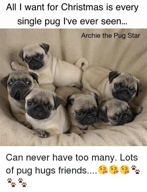 pug memes 25 best memes about pugs pugs memes