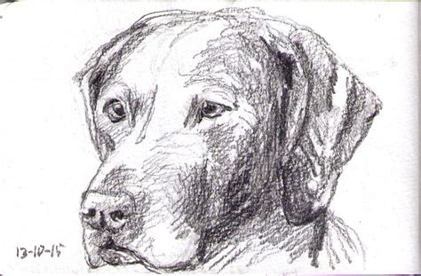 puppy sketches an update of 9 sketches one drawing daily