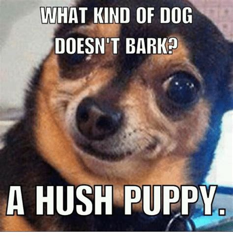 Puppie Memes - what kind of dog doesn t barko a hush puppy dogs meme on