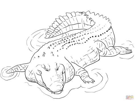 Coloring Page Alligator by Indo Pacific Saltwater Crocodile Coloring Page Free