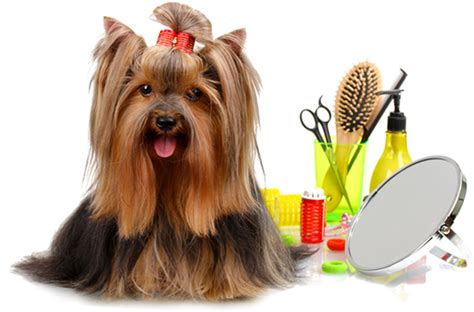 imagenes en png de animales groomingest 233 tica nuuginuugi