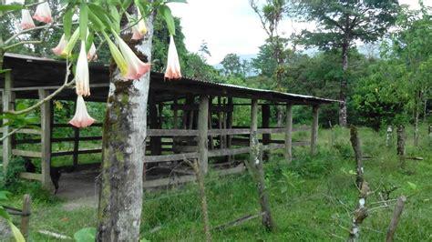 hängematte zu verkaufen zu verkaufen 7 9 ha rinder farm bei dos rios de upala