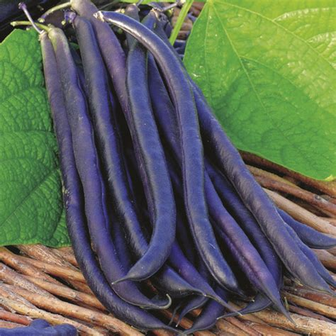 growing french beans planting instuctions  pictures
