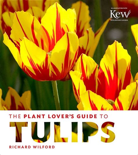 plant lovers the plant lover s guide to tulips gardenbunch
