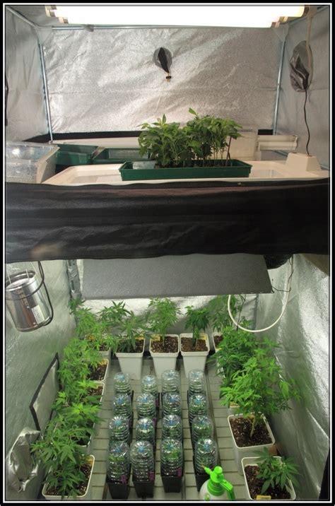 armario para esquejes iluminaci 243 n en cultivos de marihuana indoor 237 culo y