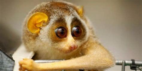 film animasi hewan lucu koleksi 10 binatang lucu tapi berbahaya gambargambar co