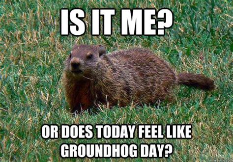 groundhog day jokes pictures happy groundhog day all the memes gifs you need to see