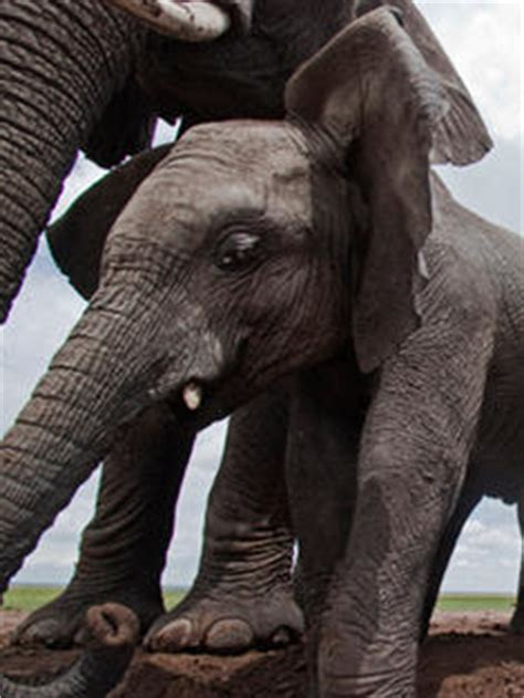 stop wildlife crime | pages | wwf