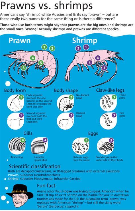 eating pattern synonym image gallery shrimp prawn