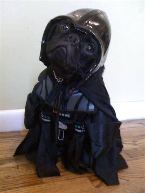 badass dog houses pug vader what a cute little badass a dog day