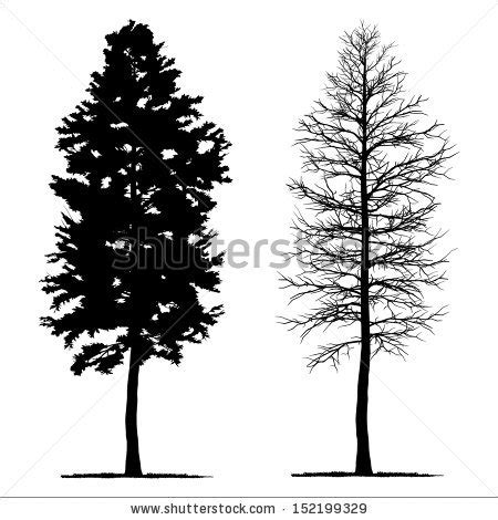 aspen forest silhouette light pine tree pine pencil and in color pine tree pine