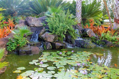 patio dole urlaub auf hawaii besuch der dole plantage projekt