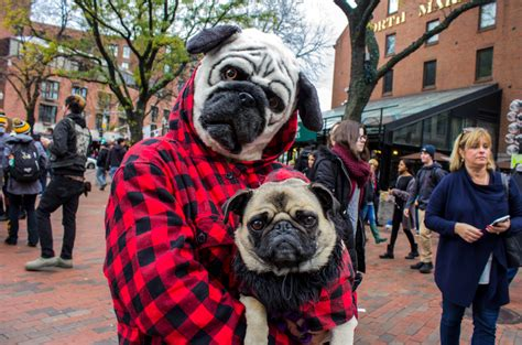 photos halloween pet parade and costume contest boston university news service