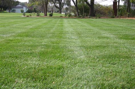 grass for backyard front yard grass www pixshark com images galleries