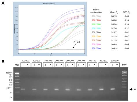 rt qpcr optimisation of the nbs1 gene a amplification