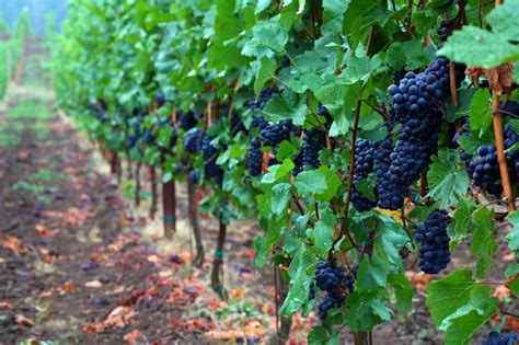northcoast grapevine tours