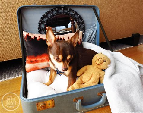 suitcase dog bed diy vintage suitcase dog bed the gold jellybean