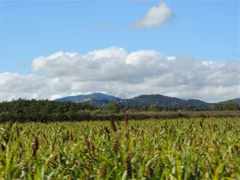 banca nuova terra toscana banca della terra al bando i primi terreni
