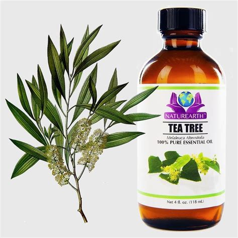 tea tree oil for bed bugs best 20 bed bugs treatment ideas on pinterest bed bug